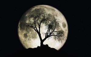 3D render of moon with stars and a tree silhouette